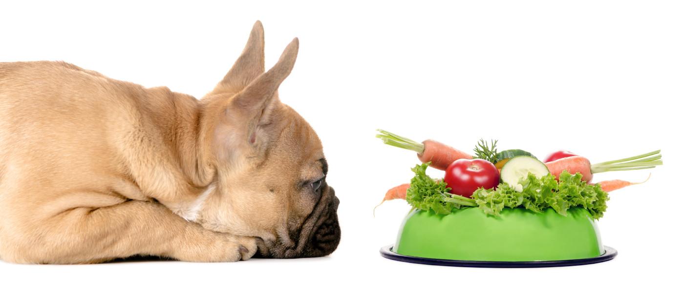 Hund-Gemuese-Sorten