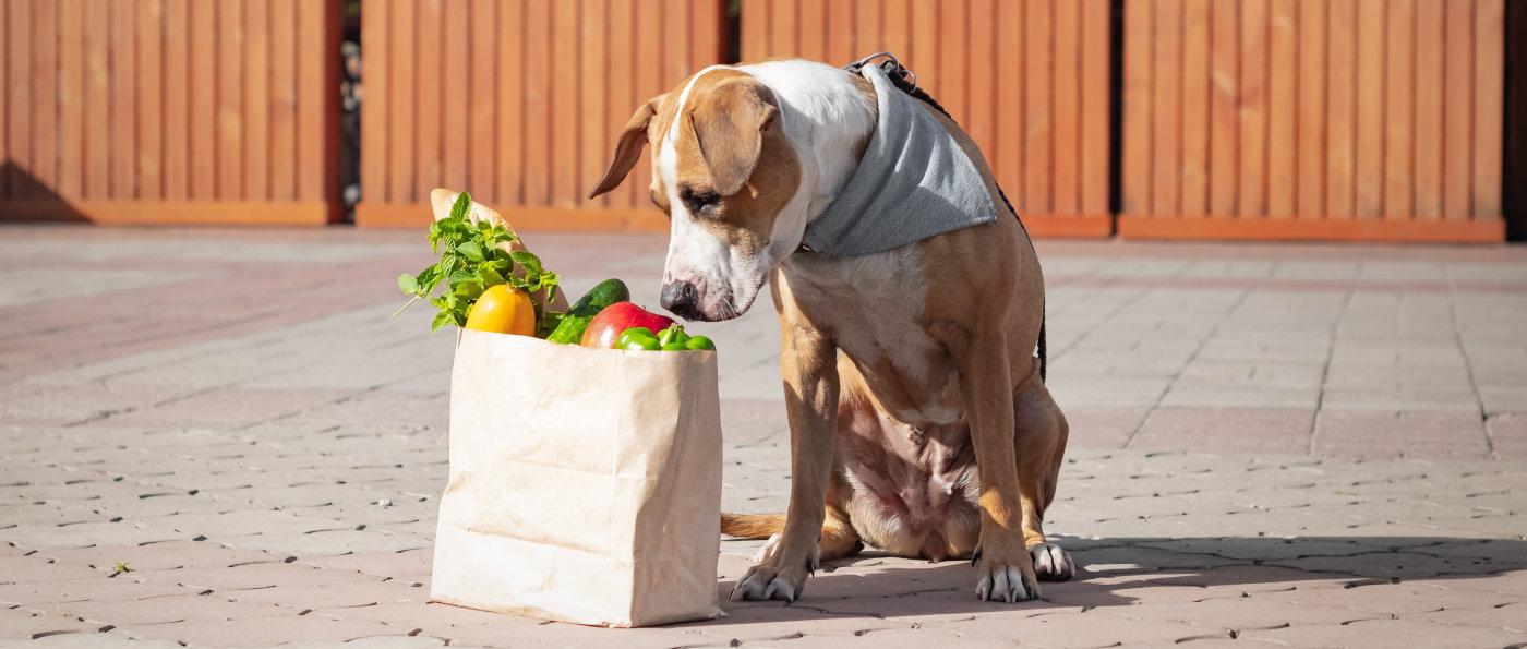 Hund-Gemuese-Sellerie-Brokoli