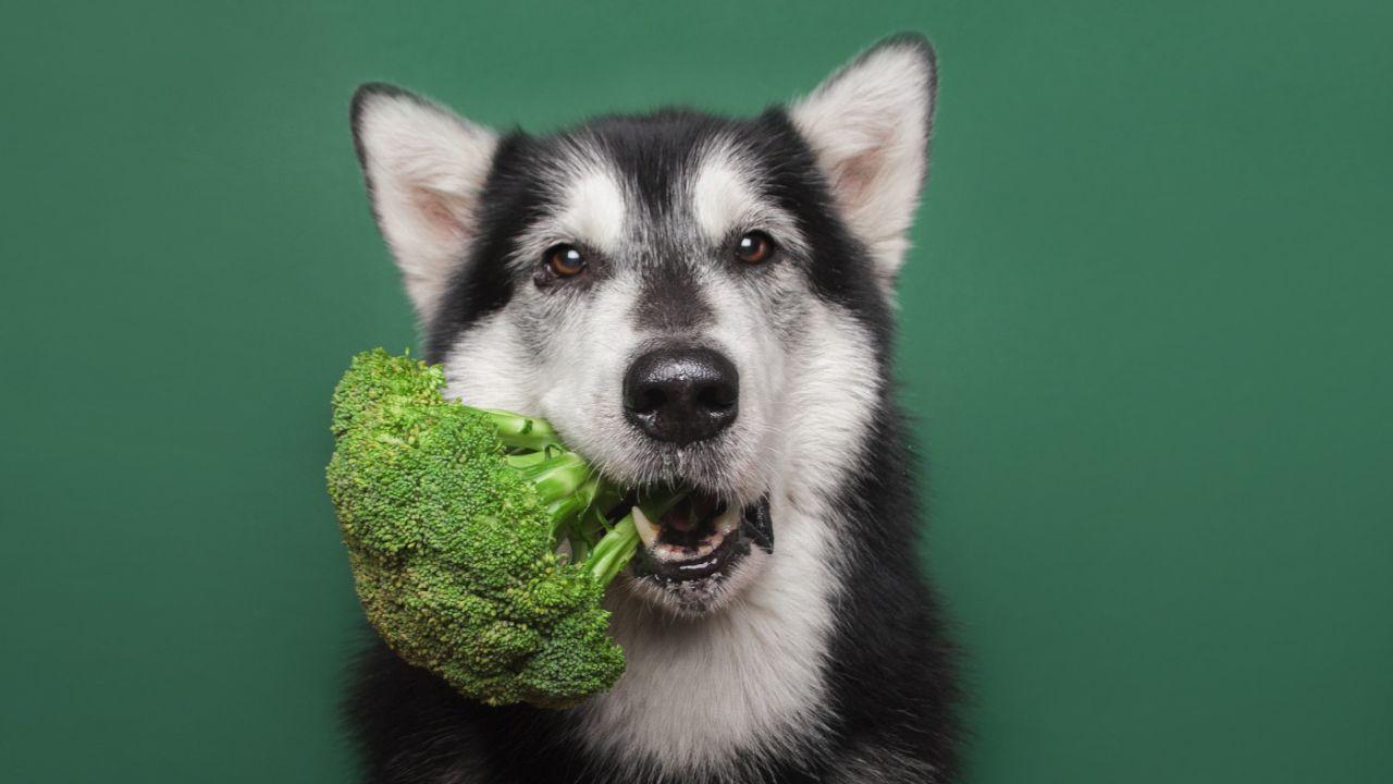 Hund-Gemuese